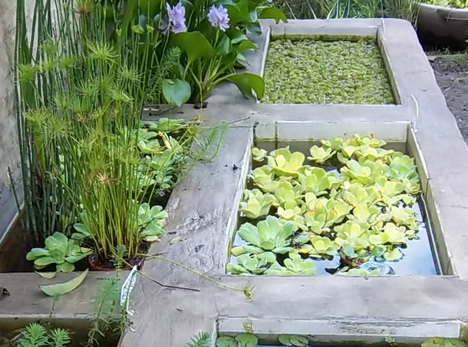 Vivero san pio plantas y flores guia de bella vista y for Viveros plantas de interior